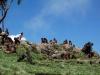 simien-mountains-gelada-3